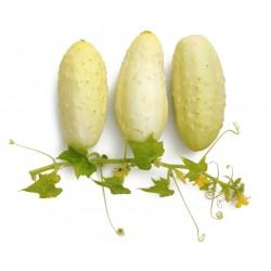witte mini-komkommer
