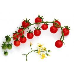 Sweet pea tomaatje