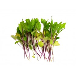 Pink lettucy