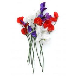 Tricolor-mix Lathyrus