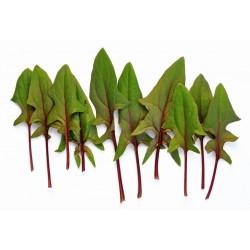 roodsteel spinazie