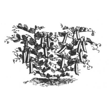 micro-erwten
