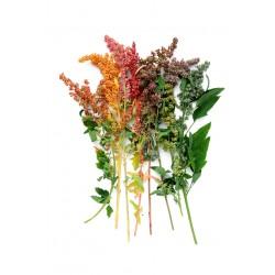 Quinoa Rainbow