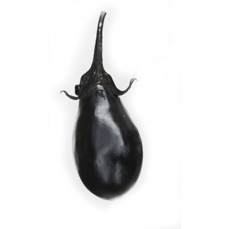 Early black egg aubergine